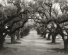 'The Avenue of the Oaks' by Beth Moon